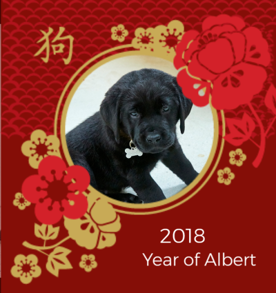 Year of My Dog