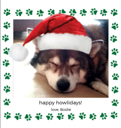 Holiday Pets Green Paws