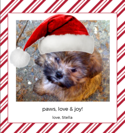 Holiday Pets Red Stripes