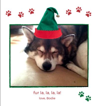 Pets Elf Hat